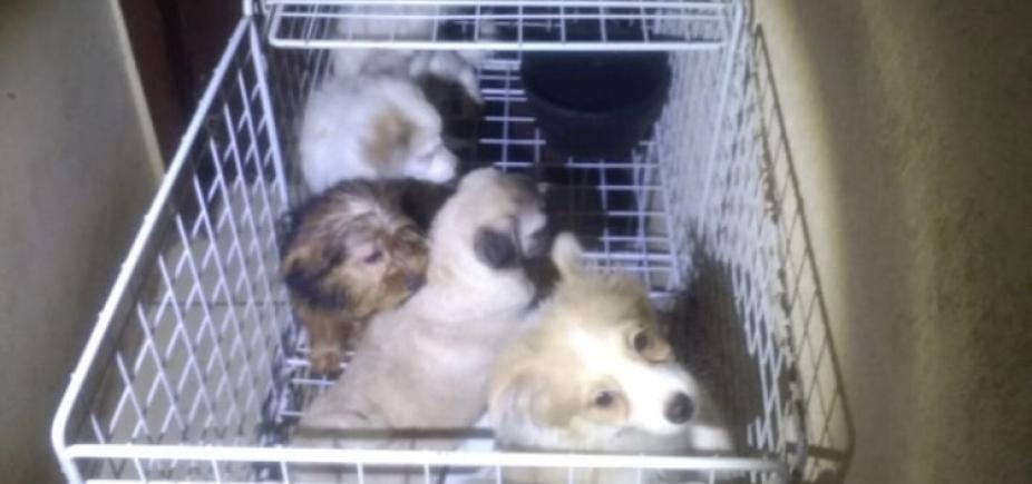 PM e ativista resgatam 113 cães em canil irregular em SP