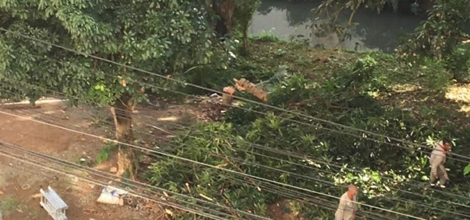 Retirada de árvores chama atenção em Salvador