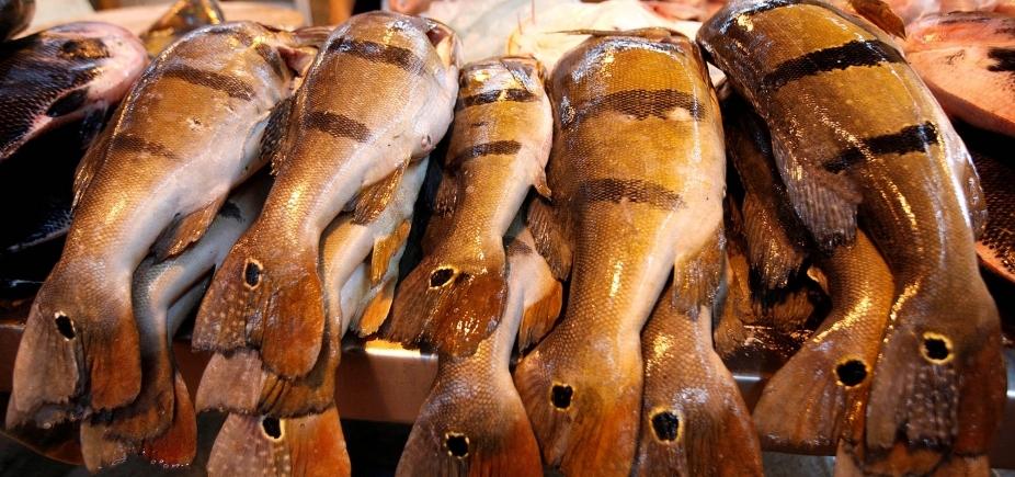 Exportação de pescado baiano tem queda de 79% no primeiro trimestre