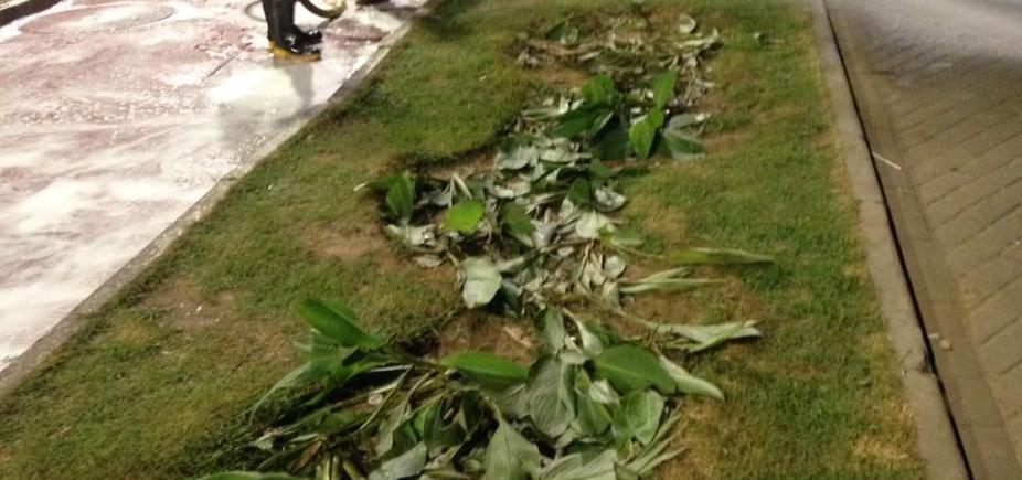 ʹCarnaval da Schinʹ destrói vegetação em Ondina