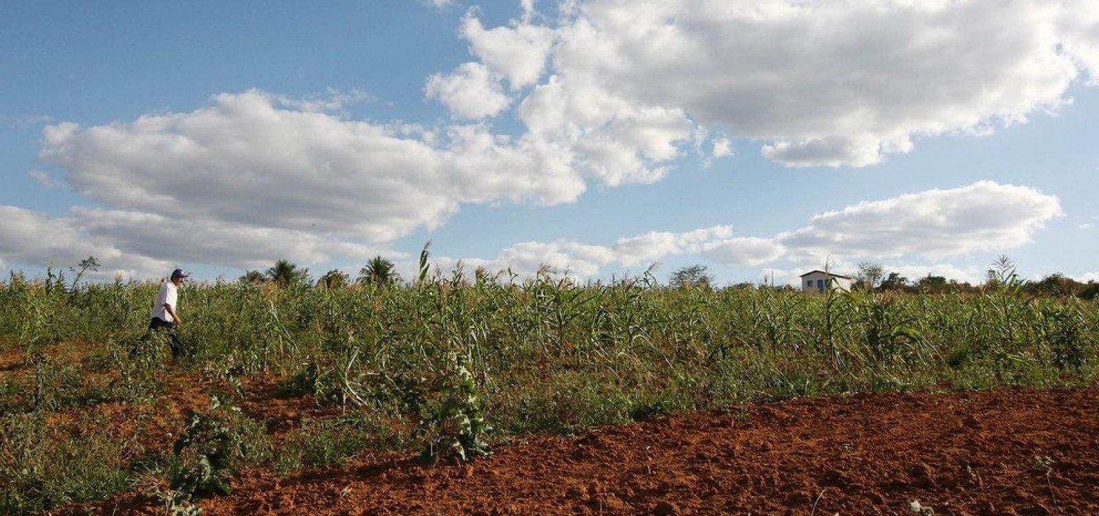 Bahia é único estado nordestino a sofrer queda no valor da produção agrícola, diz IBGE