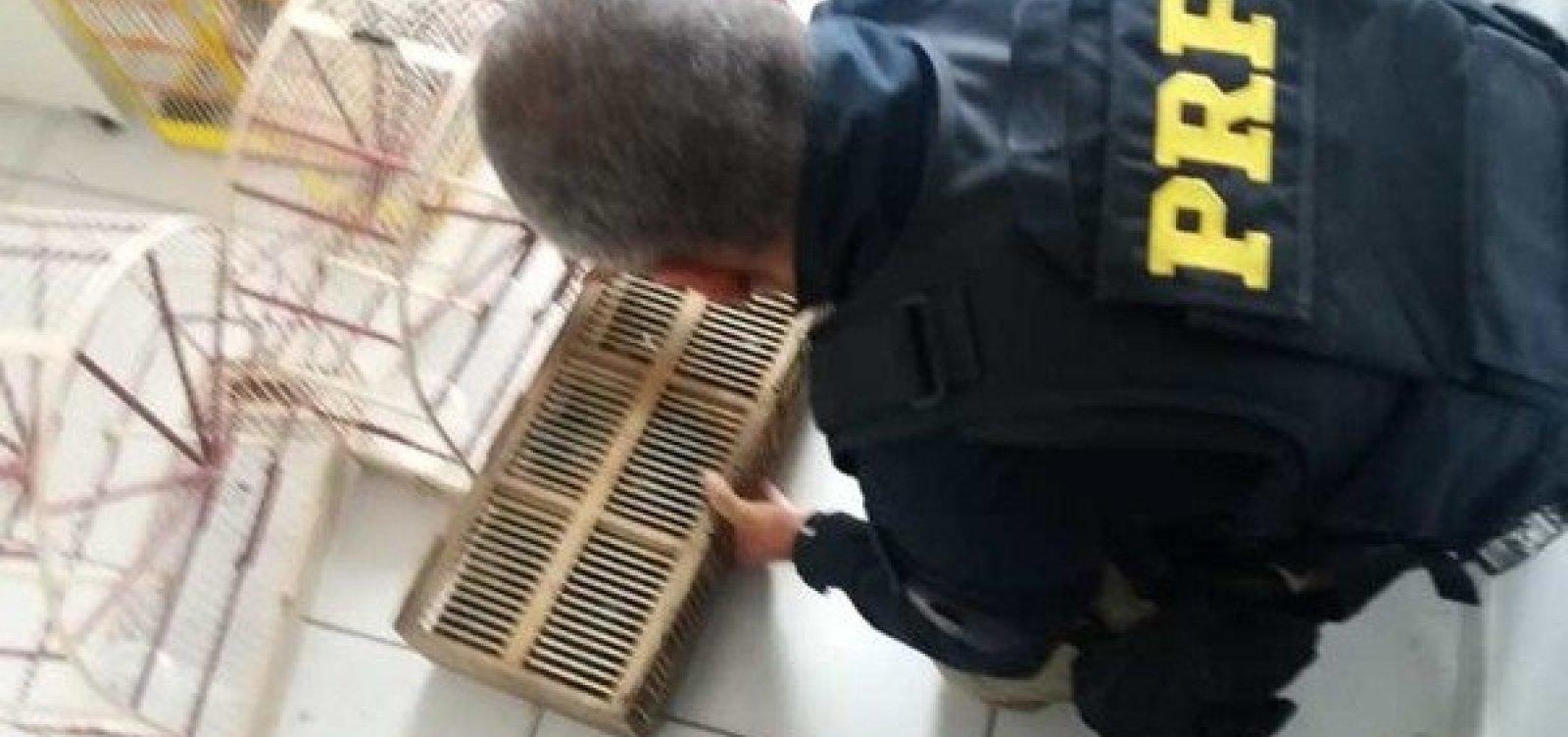 PRF encontra 200 animais silvestres em caixas dentro de veículo no sul da Bahia