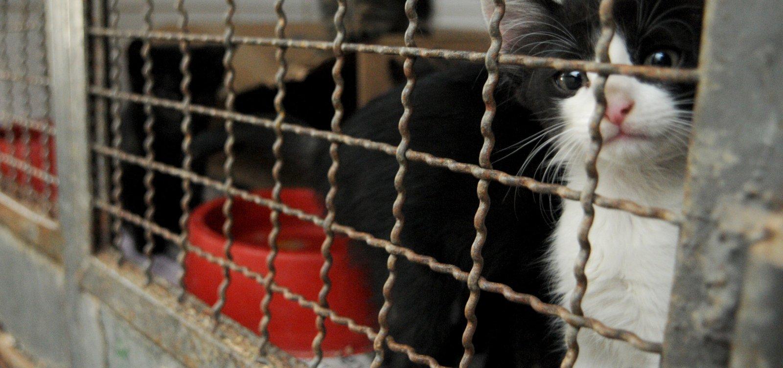 Feira de Adoção de animais será realizada no fim de semana em Salvador