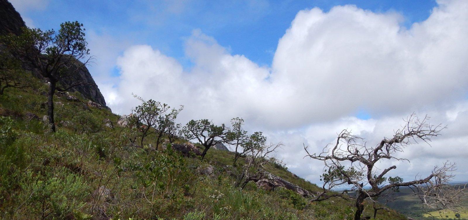 Área de preservação do cerrado no oeste baiano é a maior do estado