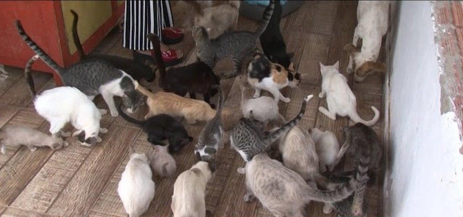 Polícia investiga morte de 20 cães e gatos em Curaçá