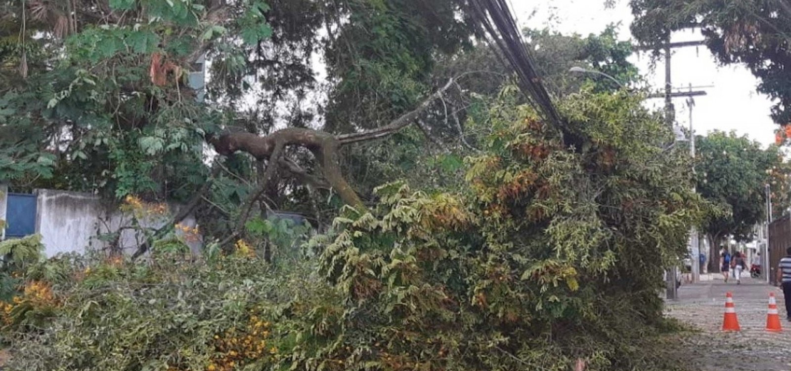 Parte de árvore cai e interdita rua em Ondina