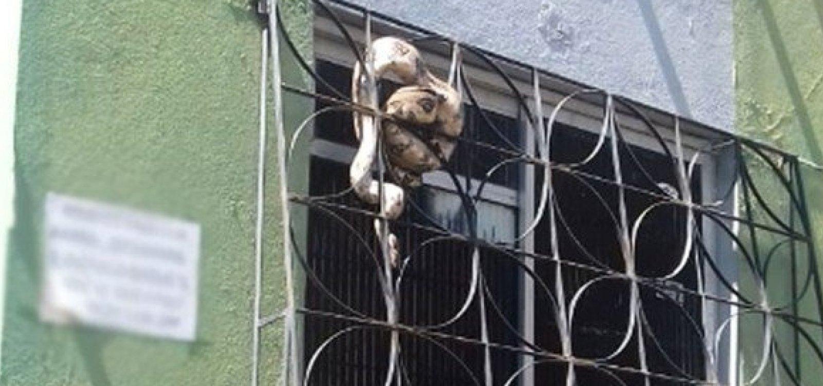 Jiboia de quase dois metros é encontrada em janela de apartamento