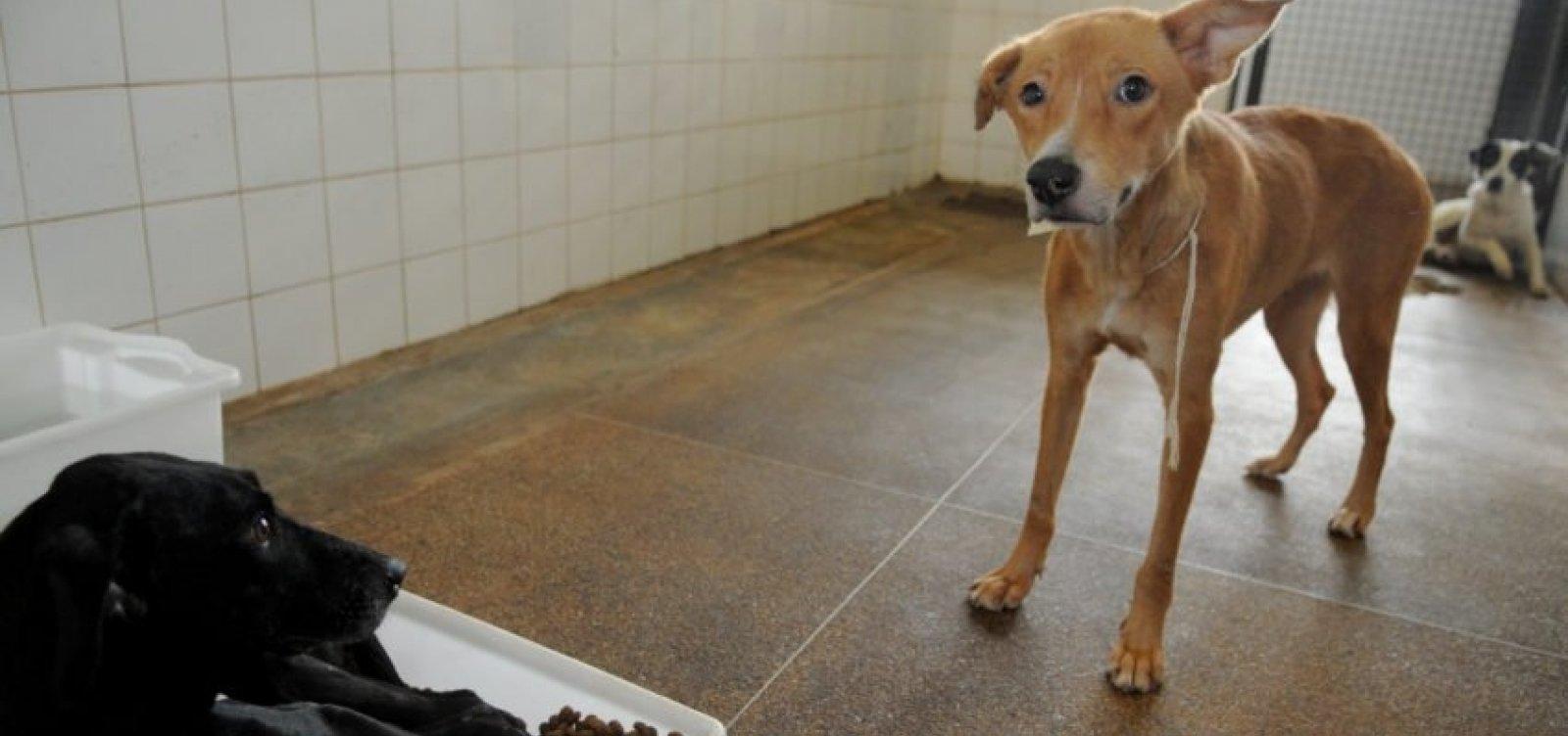 Holanda se consagra como primeiro país a não ter cachorros abandonados nas ruas