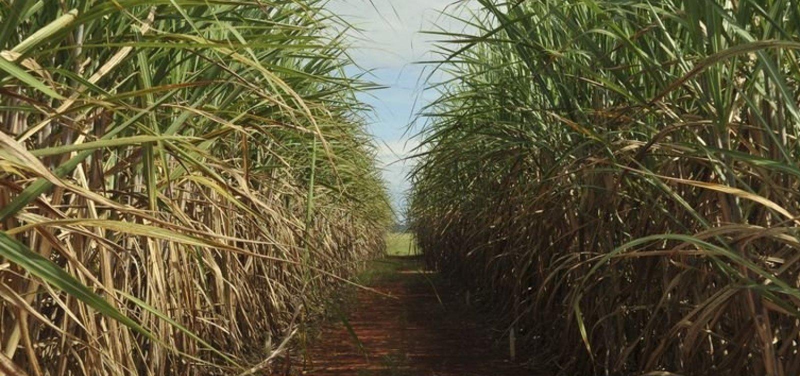 Brasil inicia disputa contra China na OMC por restrição à importação de açúcar
