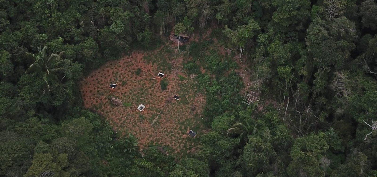 Polícias usam drone e localizam cerca de quatro toneladas de maconha