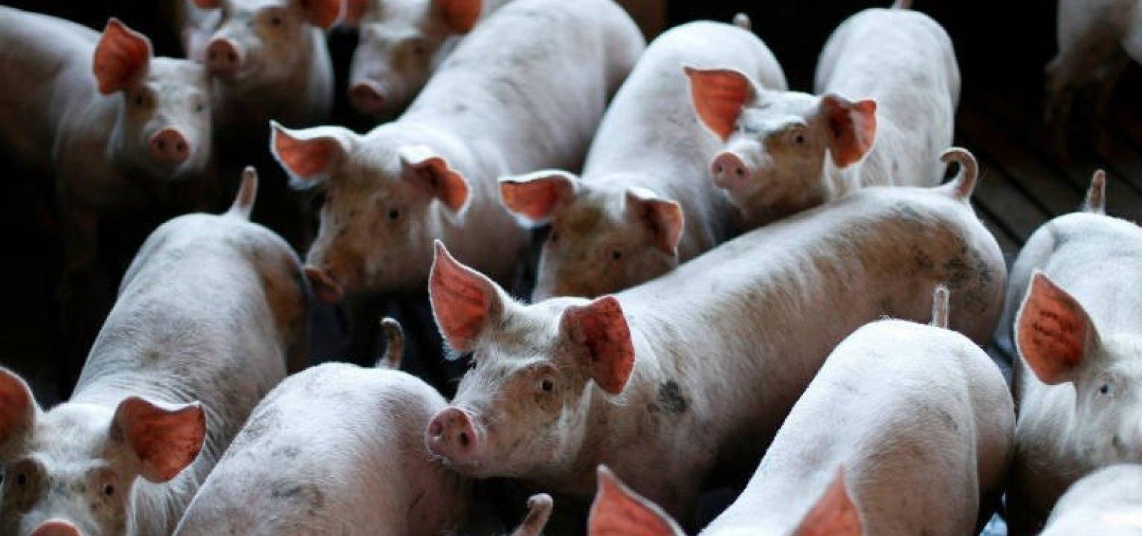 Rússia irá retirar restrições à importação de carnes de fornecedores brasileiros