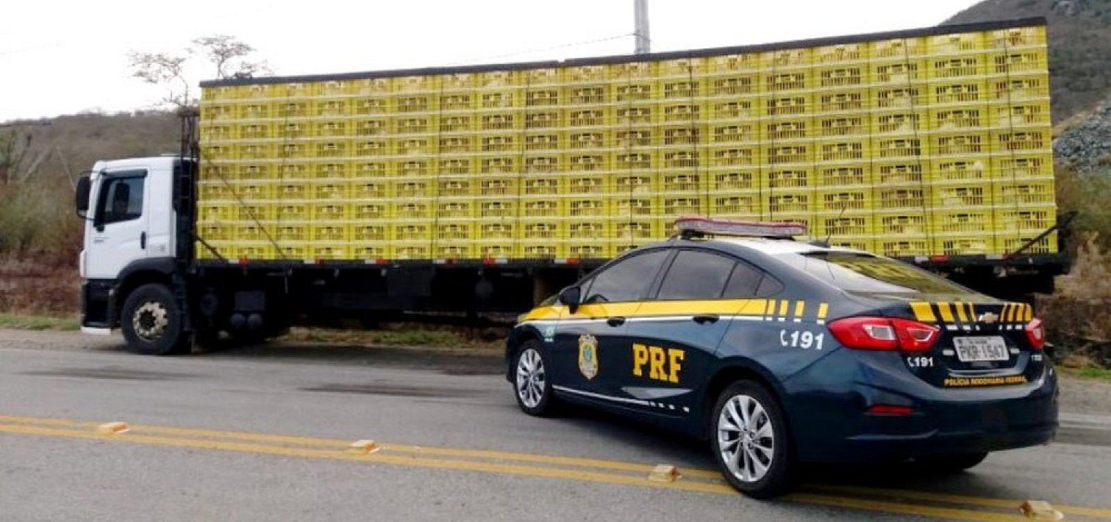 Mais de 3 mil galinhas transportadas irregularmente são apreendidas na Bahia