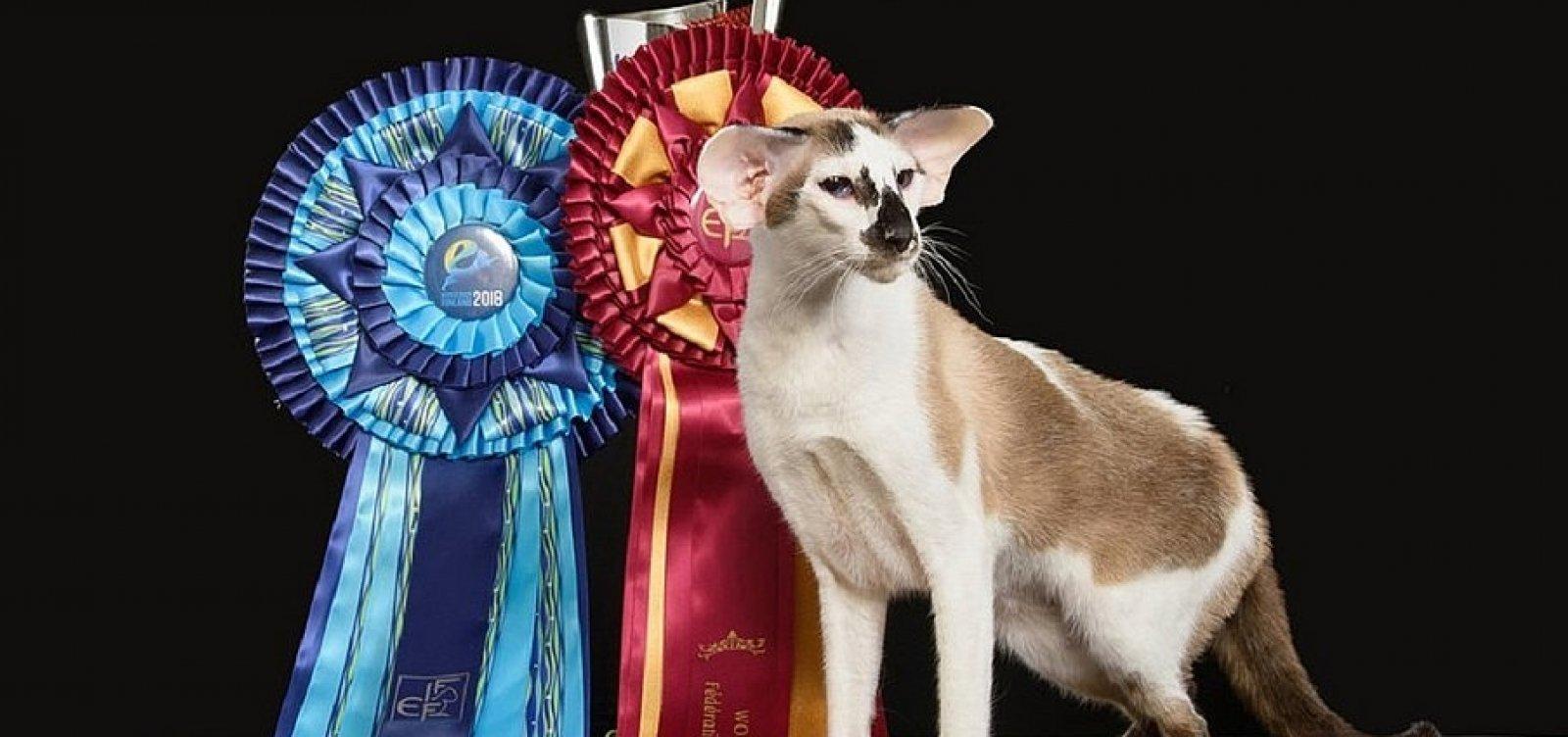 Gata baiana ganha mundial de felinos na Finlândia