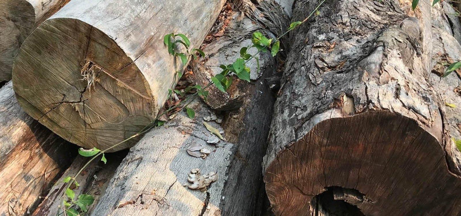 PF deflagra operação contra desmatamento ilegal na Amazônia