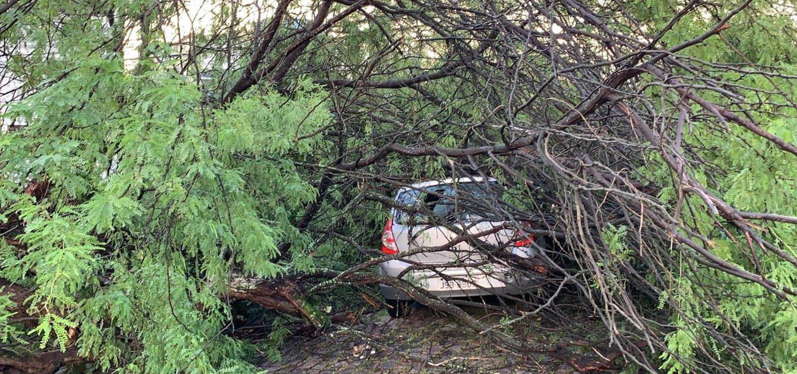 Árvore cai e atinge carros no Acupe de Brotas