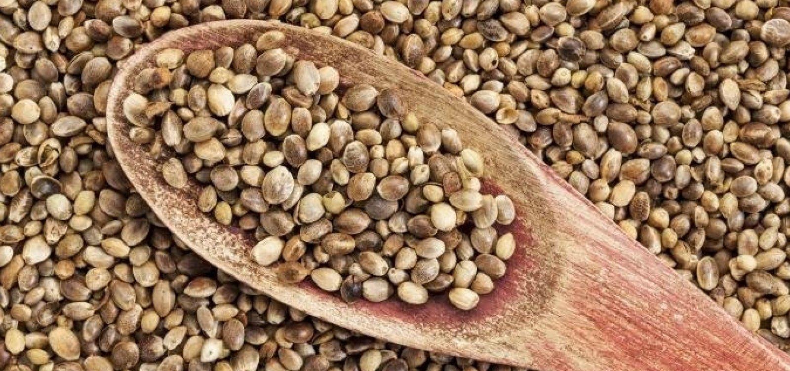 STF considera que importação da semente de cannabis não é crime