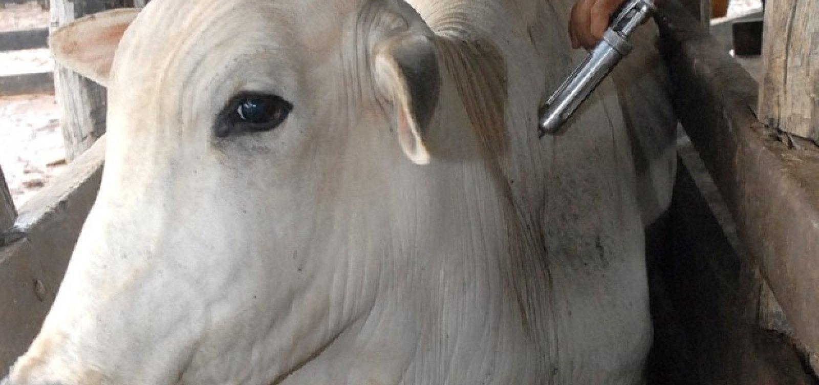 Vacinação contra Febre Aftosa na Bahia termina no dia 31 de maio
