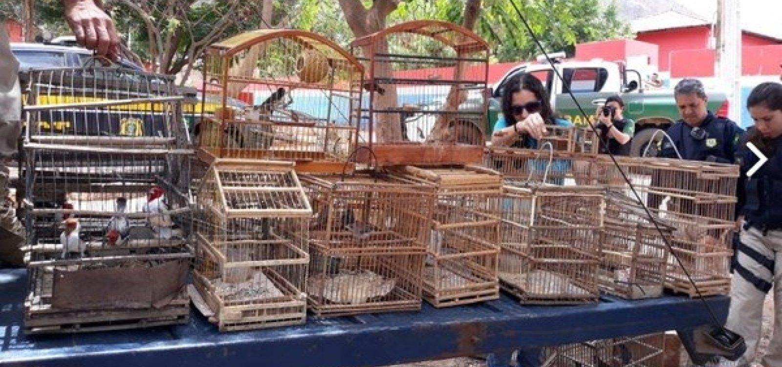 Operação do MP-BA resgata mais de 200 animais silvestres