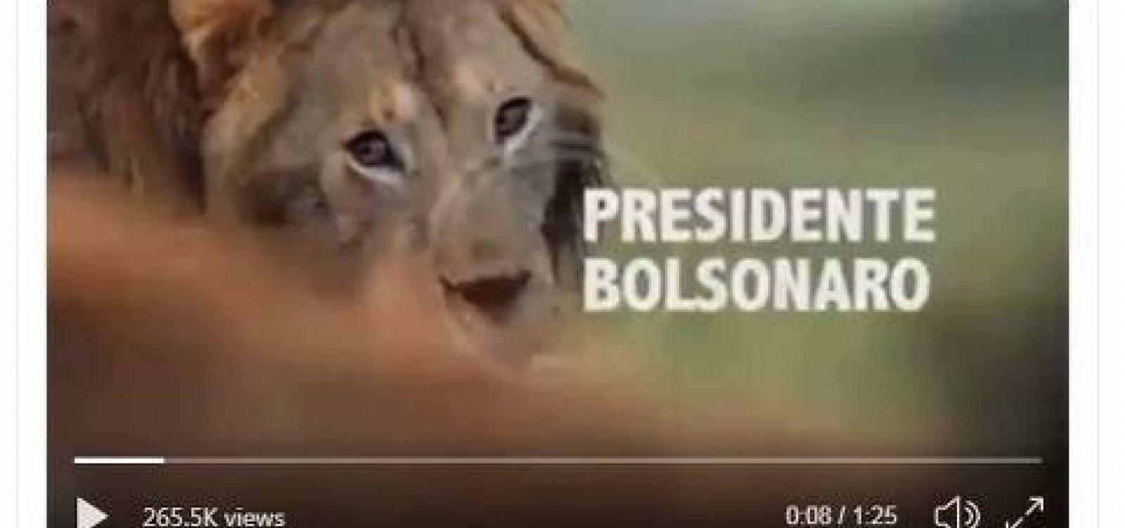 Bolsonaro apaga publicação que comparava STF e PSL a hienas que o atacam