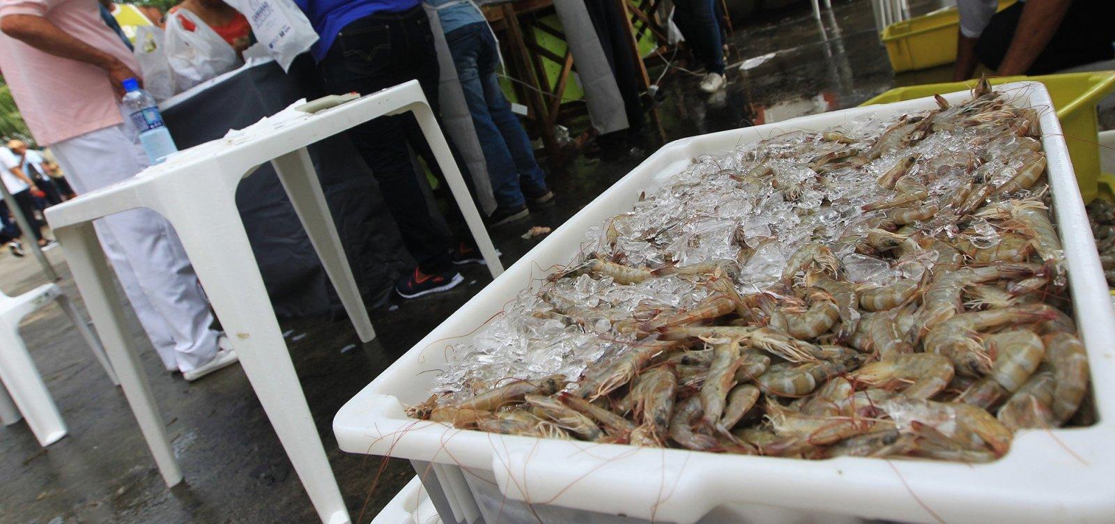 Ministério volta atrás e libera pesca de camarão e lagosta na Bahia