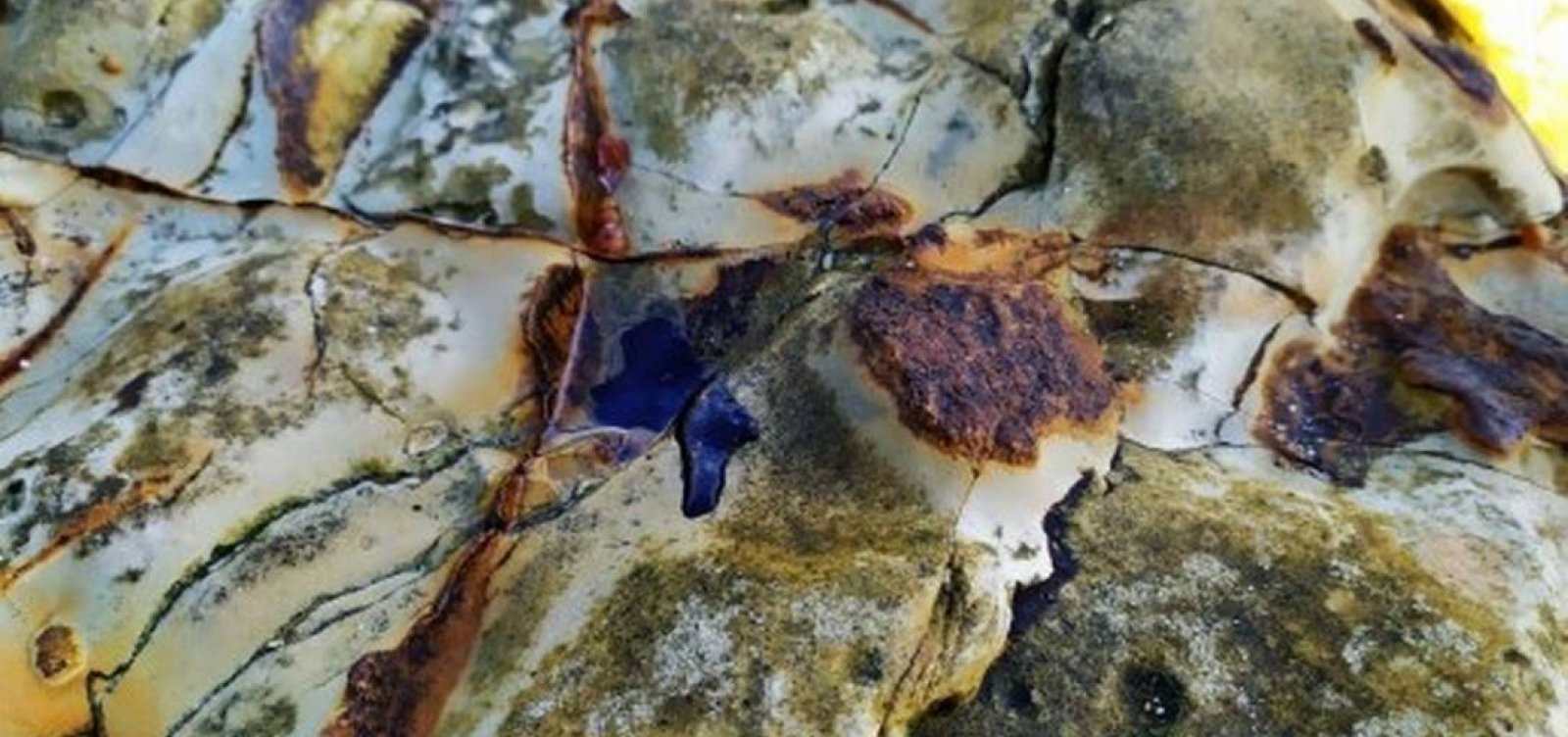 Redes de pesca apreendidas são usadas para conter óleo em Abrolhos