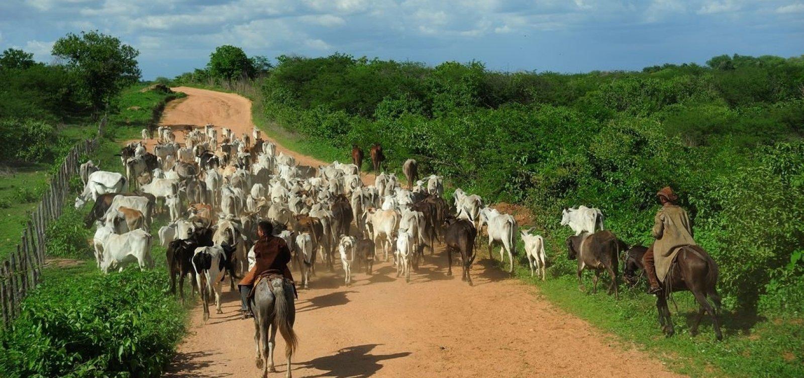 Governo tenta reverter veto à carne bovina brasileira, segundo porta-voz