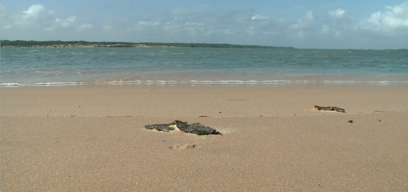 Novas manchas de óleo aparecem no litoral do Piauí