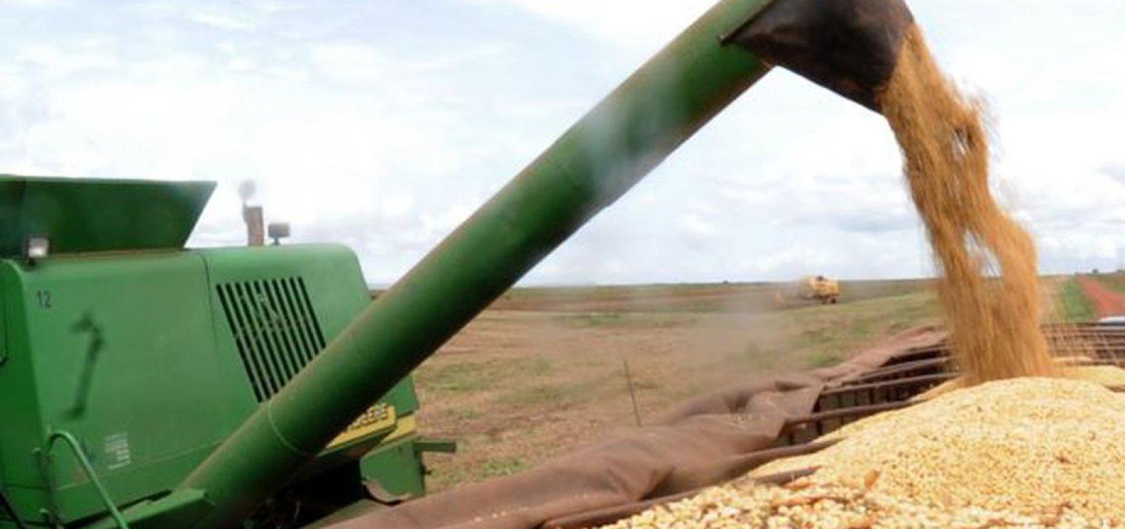 Produção de algodão, milho e soja tem estimativa de crescimento em 2020 na BA, diz IBGE