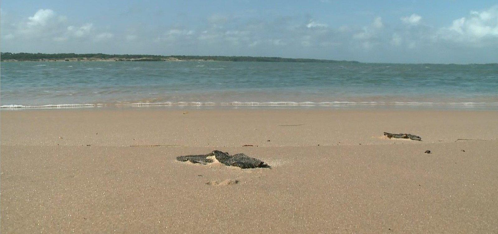 Duas praias baianas ainda têm resíduos de óleo, diz Marinha