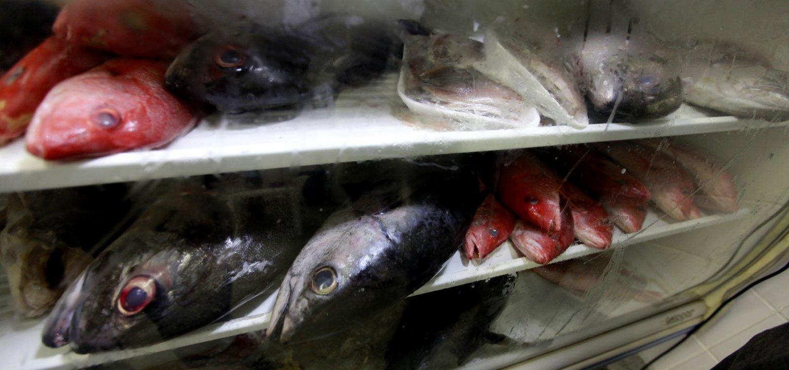 Análise aponta que pescado está próprio para consumo após contaminação por óleo na Bahia