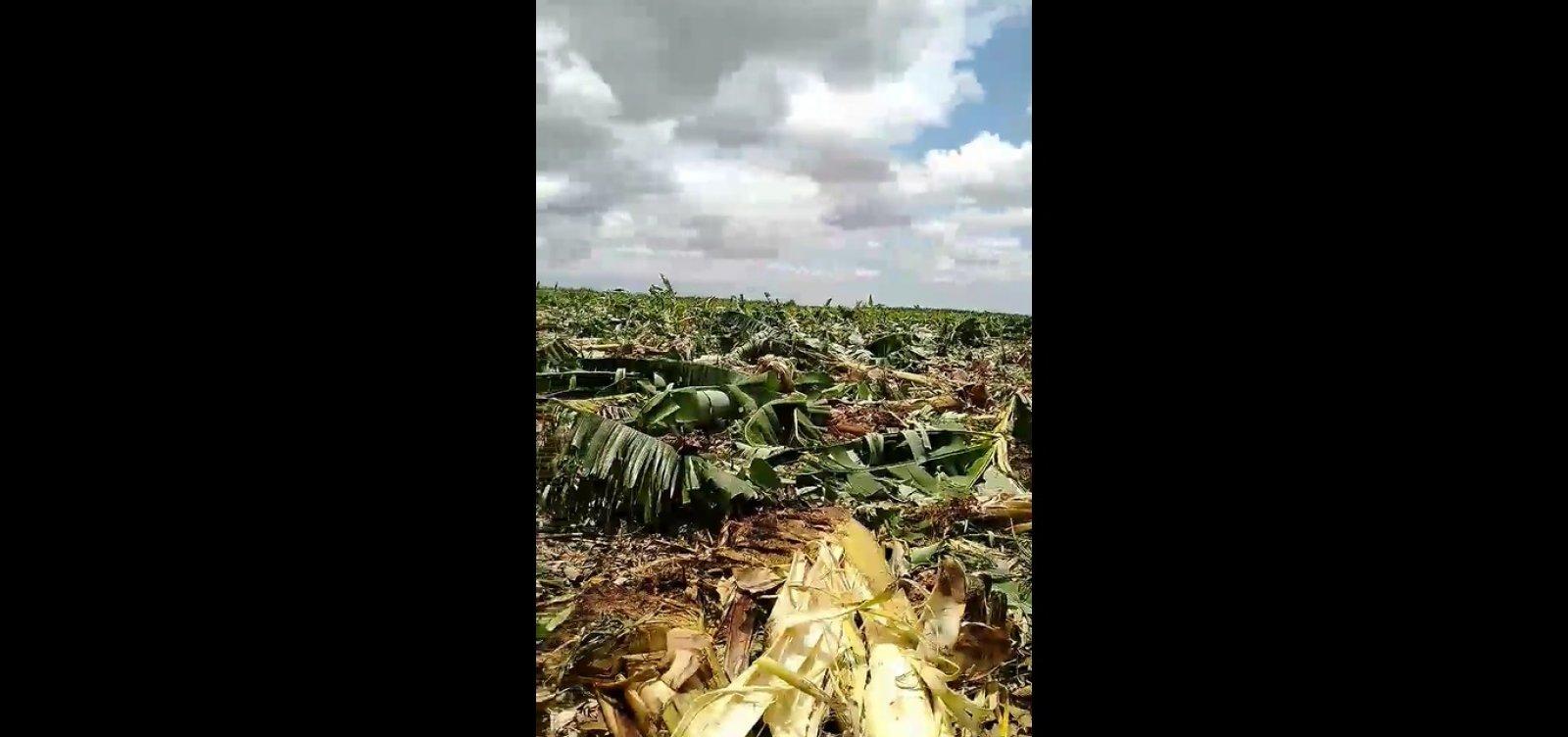 Homem denuncia destruição de plantações em acampamento desocupado na Bahia