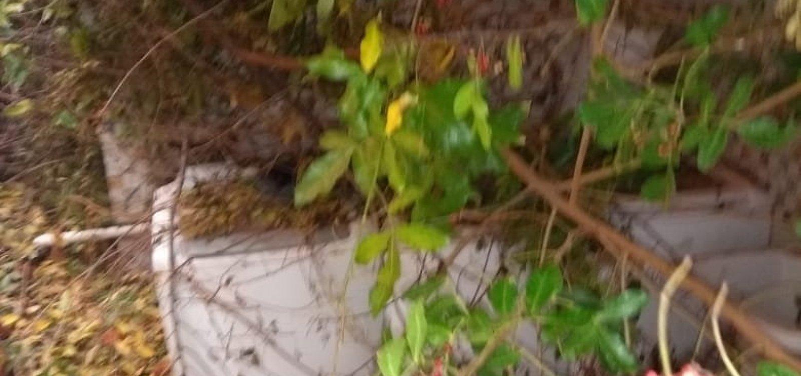 Árvore cai em residência e Codesal não faz vistoria, reclama leitor do Metro1