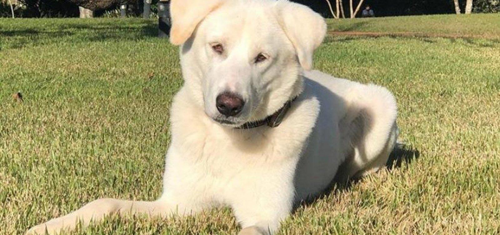 Cachorro adotado por família Bolsonaro tinha dono e será devolvido