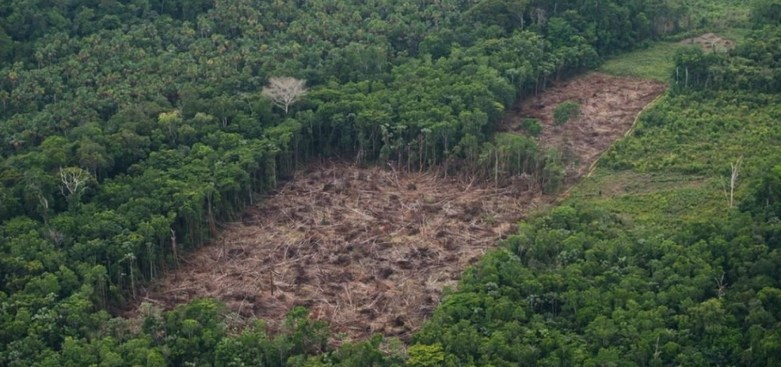 Após Inpe alertar sobre queimadas, governo demite chefe de monitoramento da Amazônia