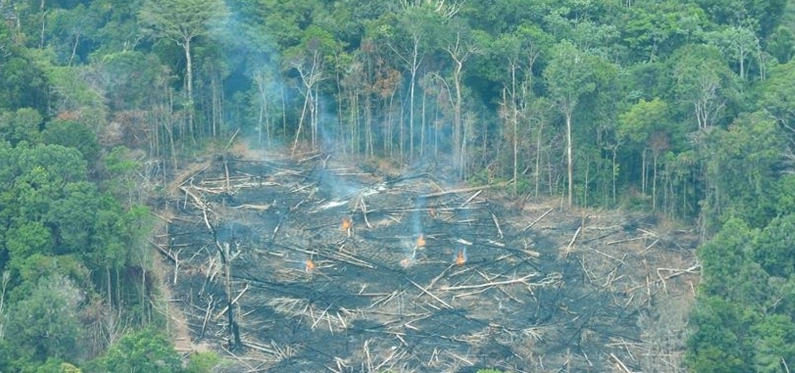 Ex-ministros e ex-presidentes do BC cobram desmatamento zero na Amazônia e no Cerrado