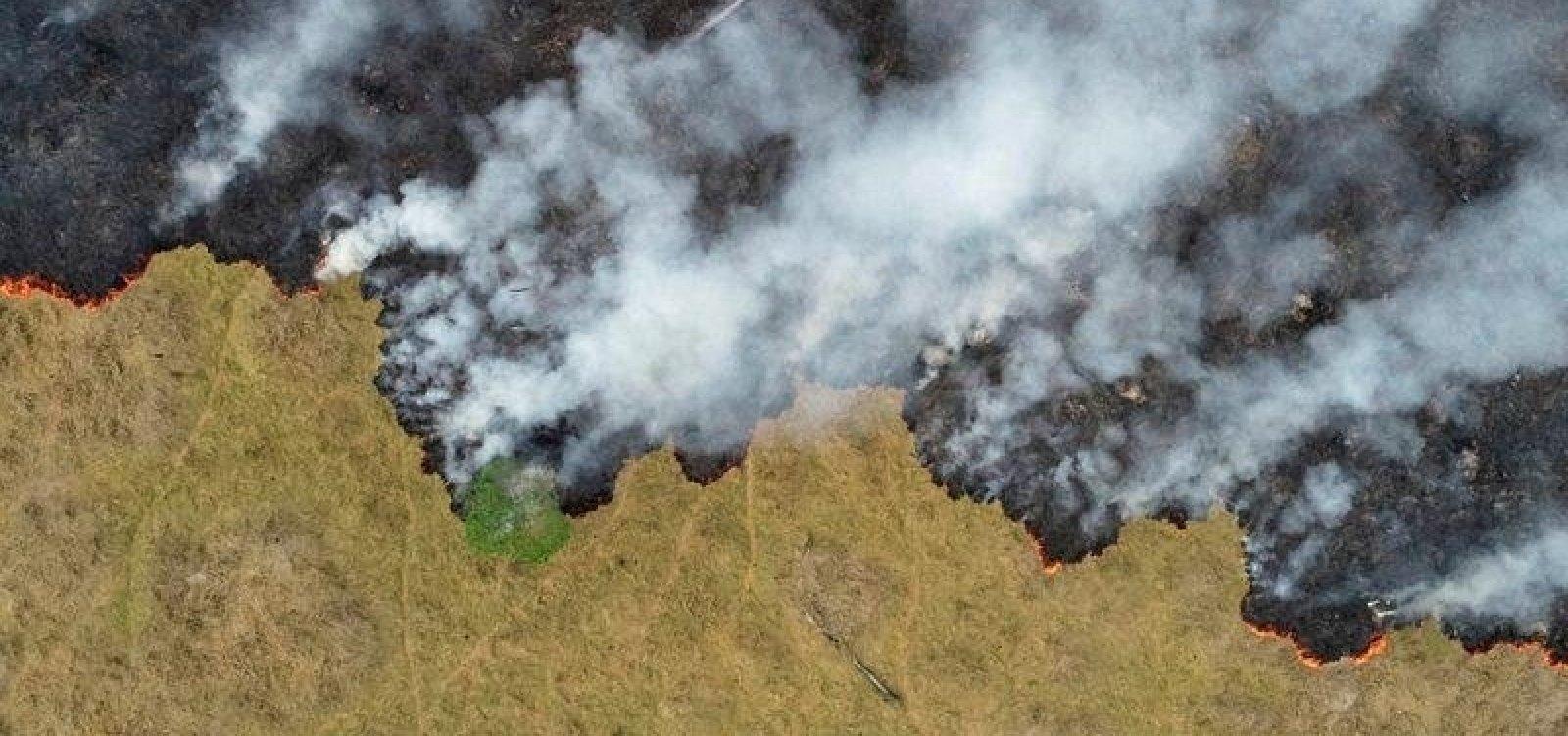 Em 18 anos, Brasil perde área de vegetação natural próxima ao tamanho da Bahia, diz IBGE